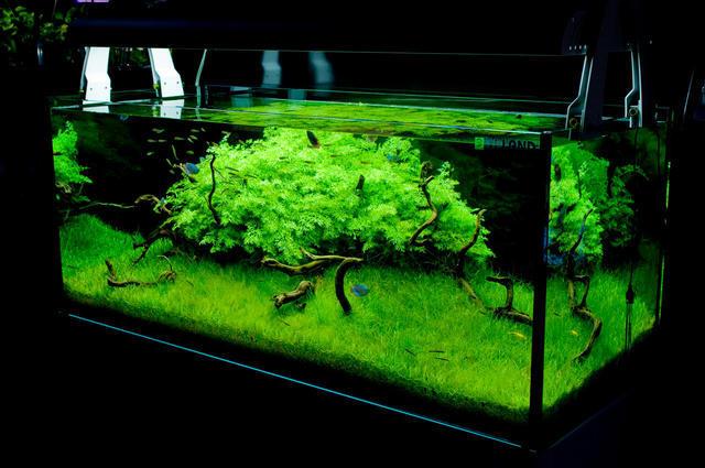 Acuarios plantados gambas caracoles y accesorios en for Accesorios para estanques de agua