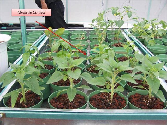 Mesa de cultivo con riego automatico en coyoac n - Mesa de cultivo ...