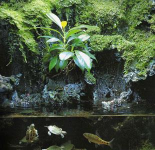 Construccion de estanques y peceras la medida en leon for Construccion de estanques