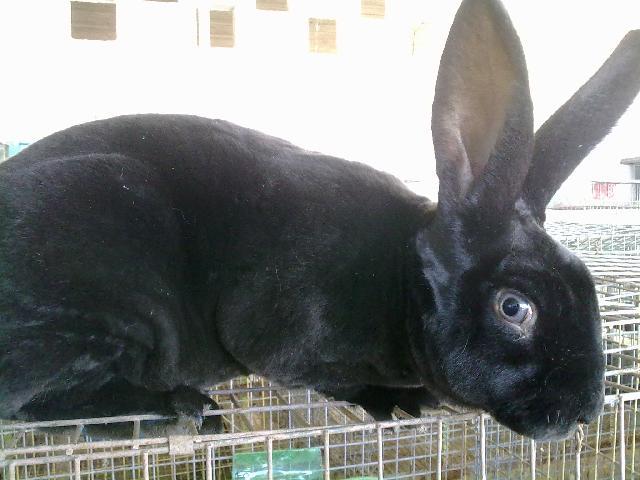 Imágenes de Venta de Conejos en Tula de Allende
