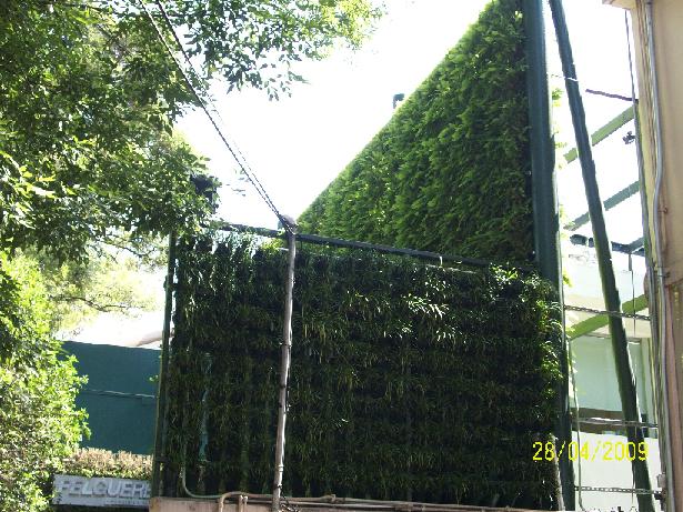 Como hacer un muro verde en cuajimalpa - Como hacer un muro verde ...