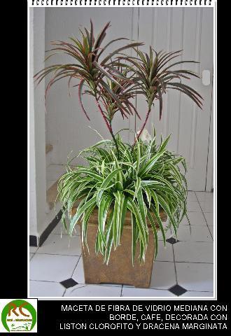 Im genes de plantas artificiales en merida for Viveros de plantas de ornato