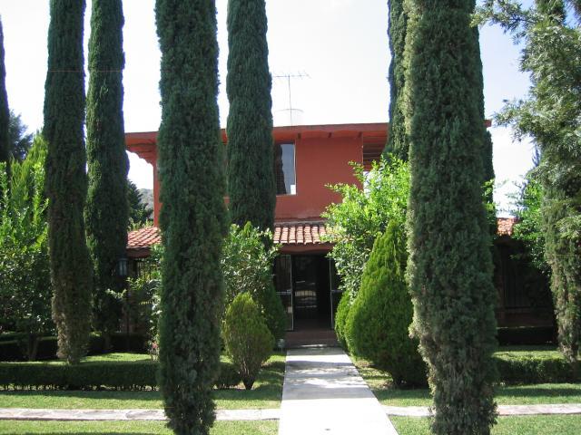 pinos para jardin dise o belle maison
