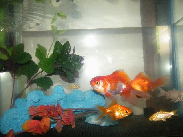 pin peces criadero en cuautla on pinterest
