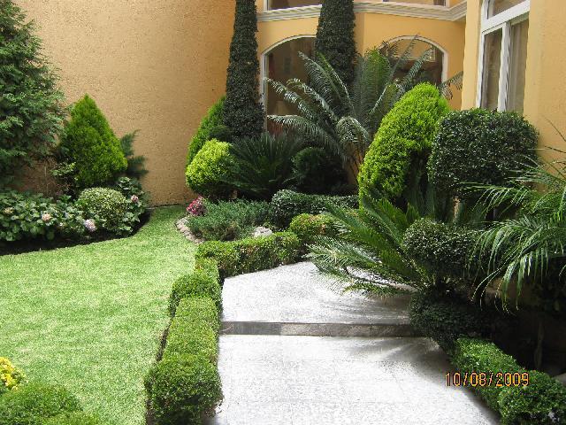 Im genes de jardineria el eucalipto en mexico ciudad de - Imagenes de jardineria ...