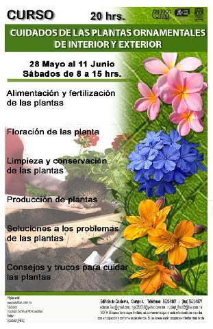 Cuidado de las plantas orlamentales del interior y del exterior unam fes cuautitlan en cuautitlan - Cuidados de las hortensias ...