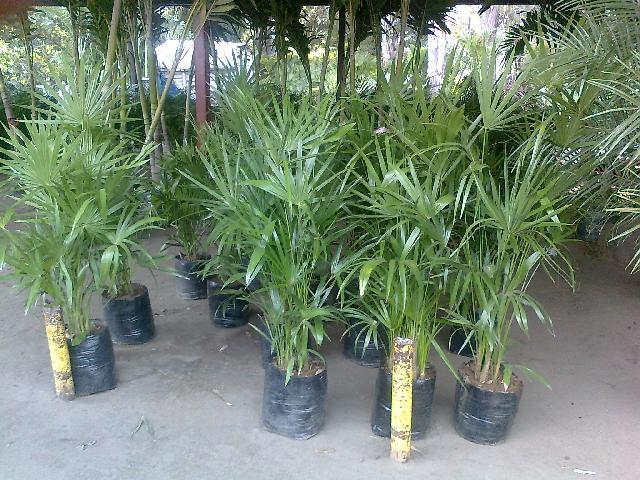 Im genes de jardineria en xochimilco en xochimilco - Plantas exterior sombra ...