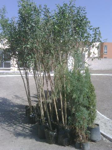 Im genes de jardineria bonsai en xochimilco for Jardineria xochimilco