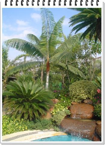 Decoracion de jardines con palmeras car interior design - Palmeras para jardines ...