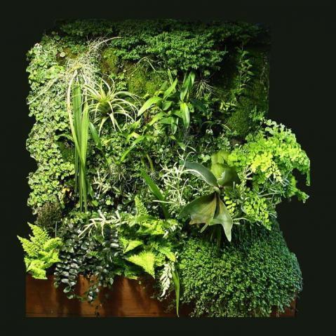 jardineria jams jardineria artistica en izcalli en