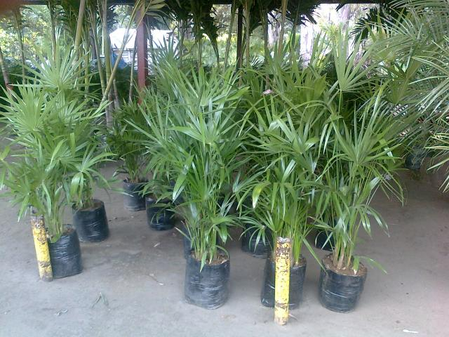 Im genes de invernadero xochimilco en xochimilco - Tipos de plantas de exterior ...